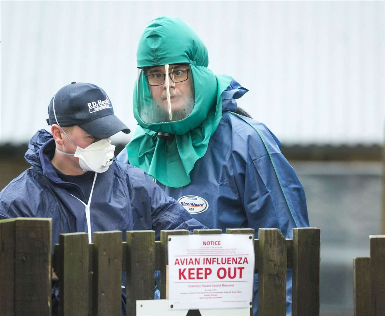 Bird flu case detected in Northern Ireland