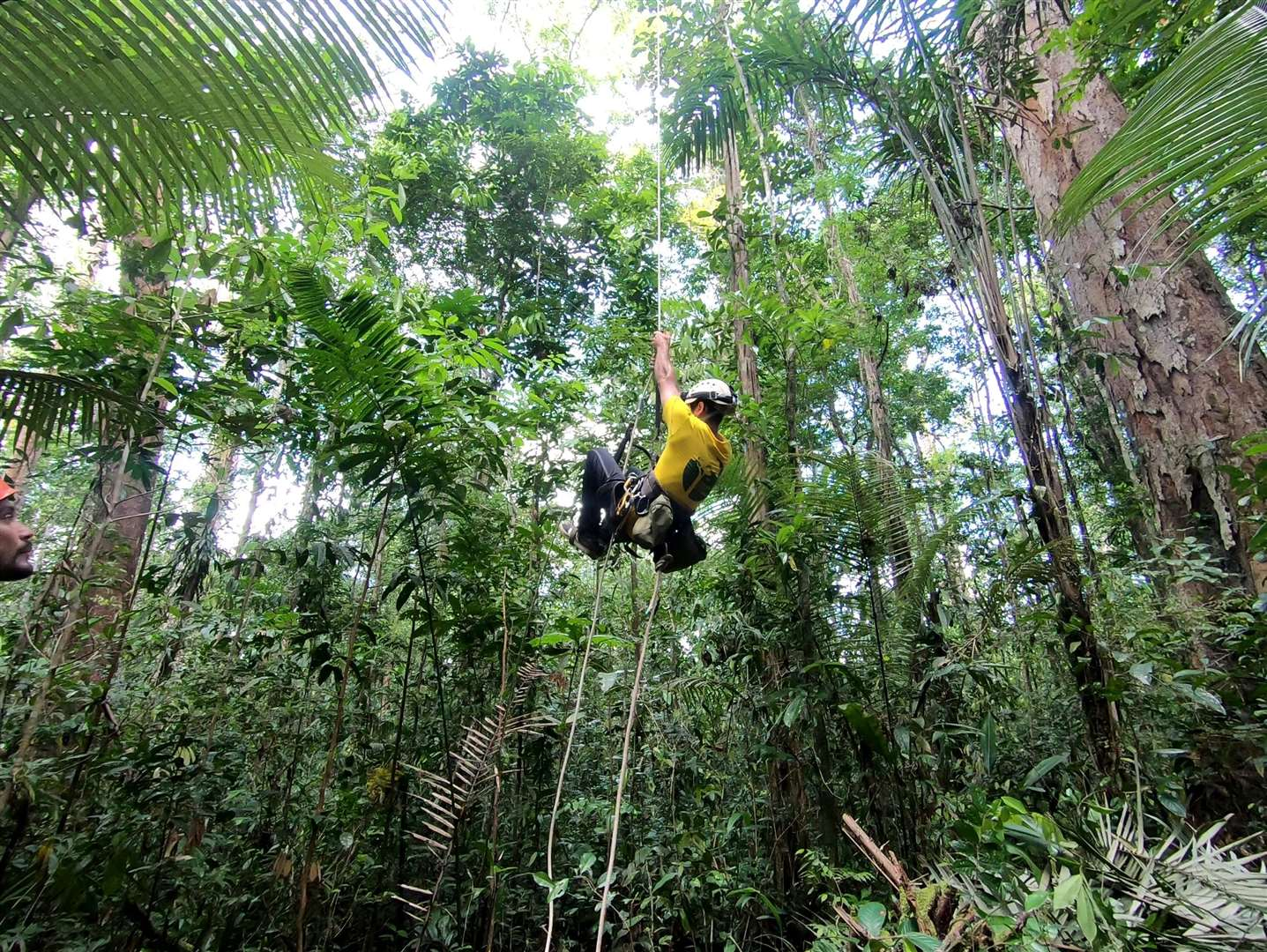 Fabiano climbing one of the tall trees in the Amazon. Picture: Toby Jackson