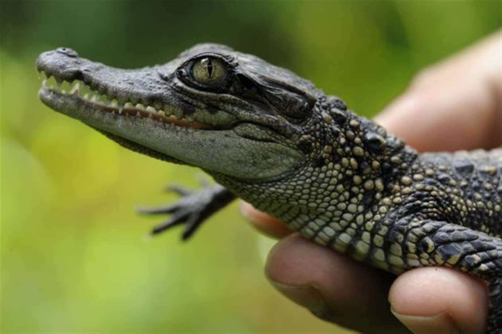 Success for Cambridge conservation charity battling to save one of world's rarest reptiles