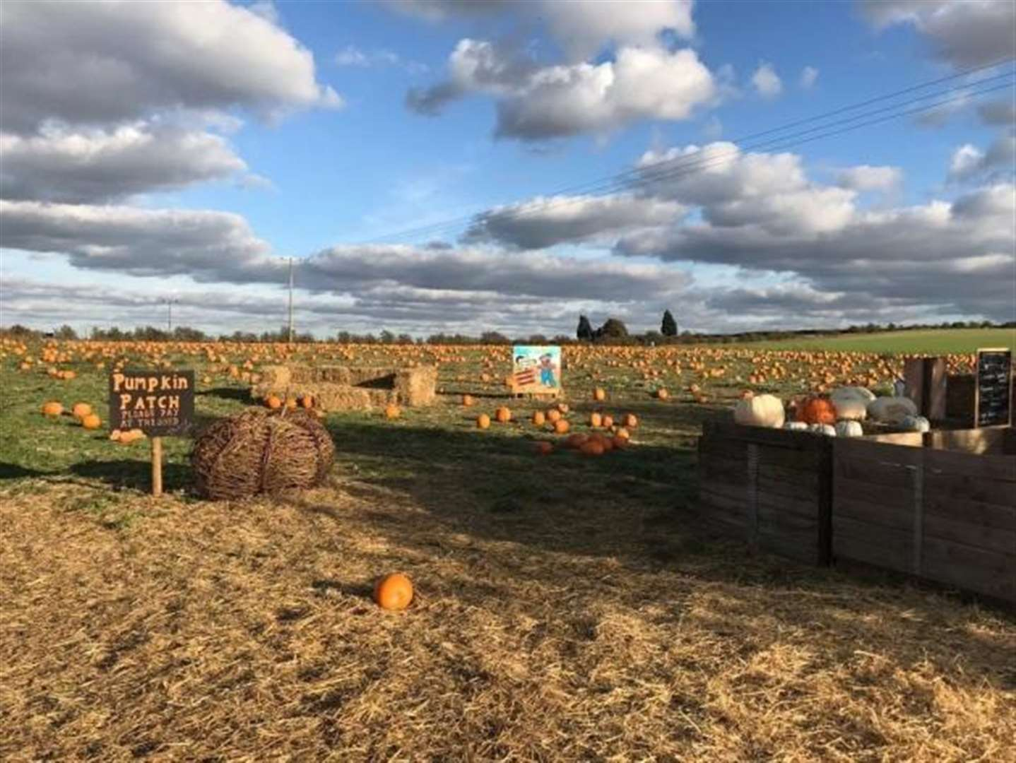 Pumpkin Jim's pick-you-own pumpkins returns to Cambridgeshire this half term