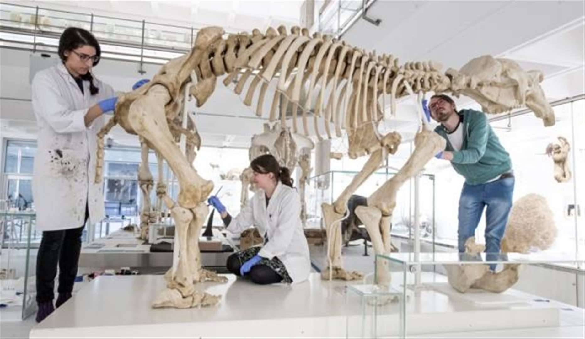 The Museum of Zoology in Cambridge is set to reopen its doors after a revamp