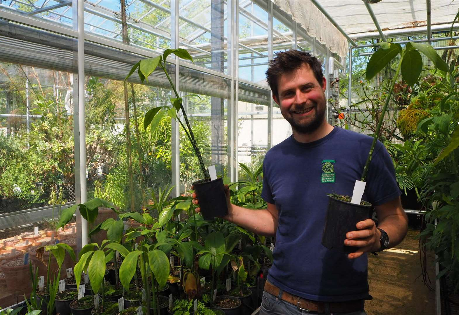 Cambridge University Botanic Garden successfully raises 160 young titan arum plants