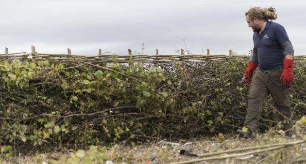2018 National Hedgelaying Championship, Lark Rise Farm, Barton, Cambridgeshire. Picture: Paul Sanwell / OP Photographic