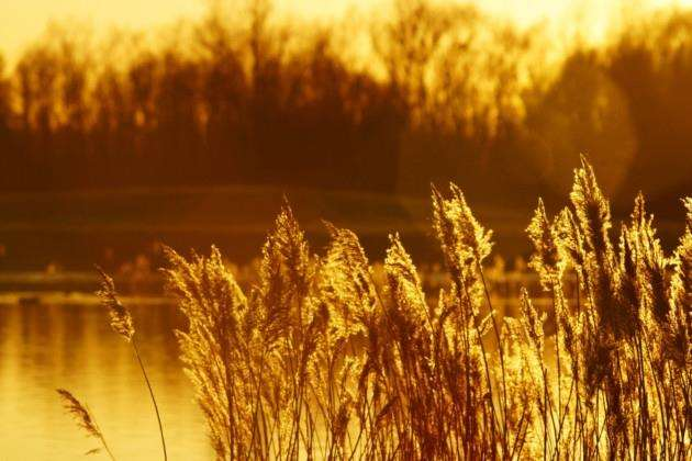 Sunset over the reeds at RSPB Fen Drayton Lakes, Cambridgeshire Picture: Paul Brackley