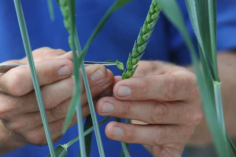 Agriculture is facing unprecedented challenges – some of which could be solved by technology including plant gene editing