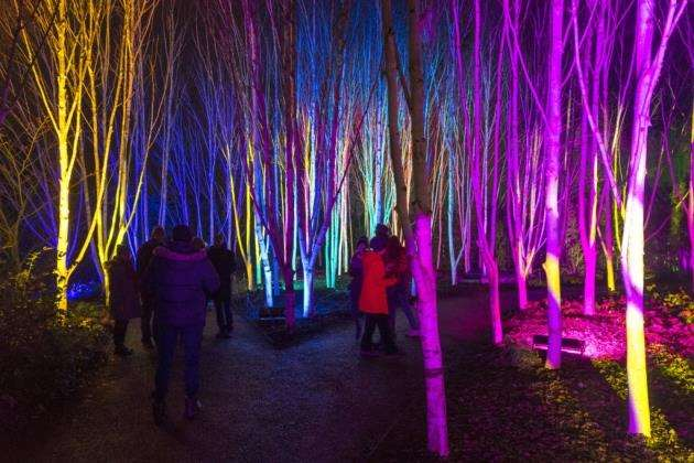 Anglesey Abbey Gardens Winter Lights 2017, Quy Rd, Lode, Cambridge . Picture: Keith Heppell