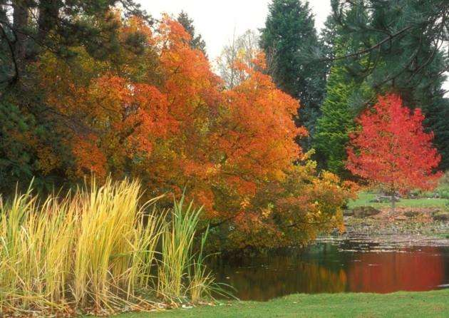 Botanic Gardens Lake. Picture: Howard Rice