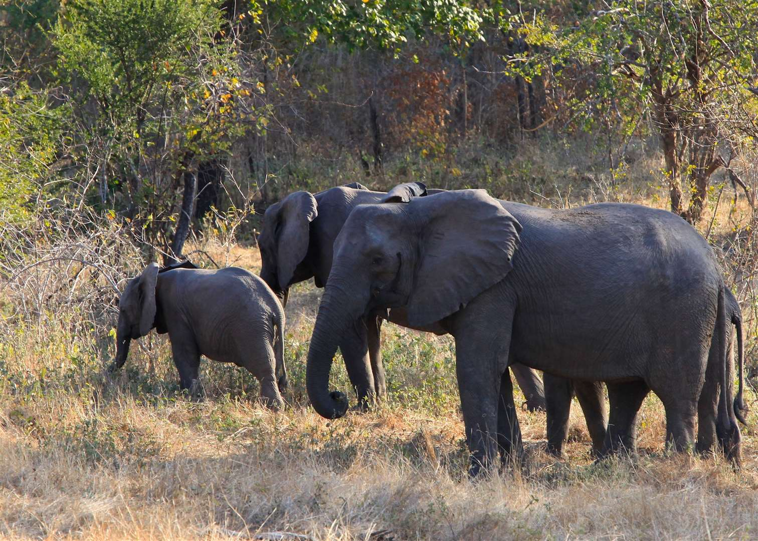 Elephants like big open spaces to roam in - like these in Chuilexi Conservancy at the Niassa National Reserve, where FFI has an ongoing project. Picture: Wim Ebersohn/FFI