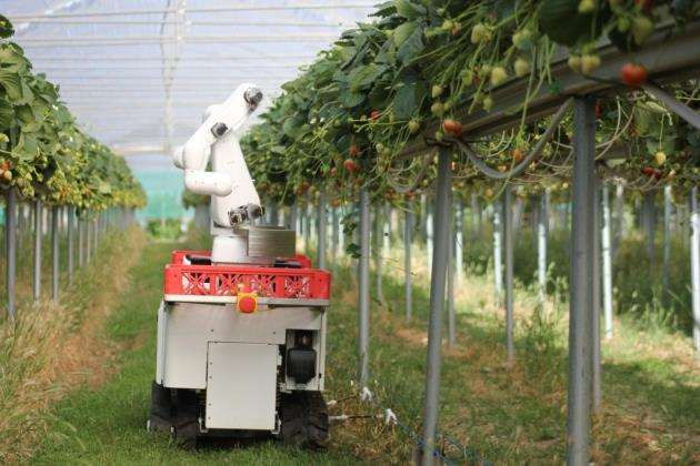 Dogtooth Technologies strawberry-picking robot is tested in Australia