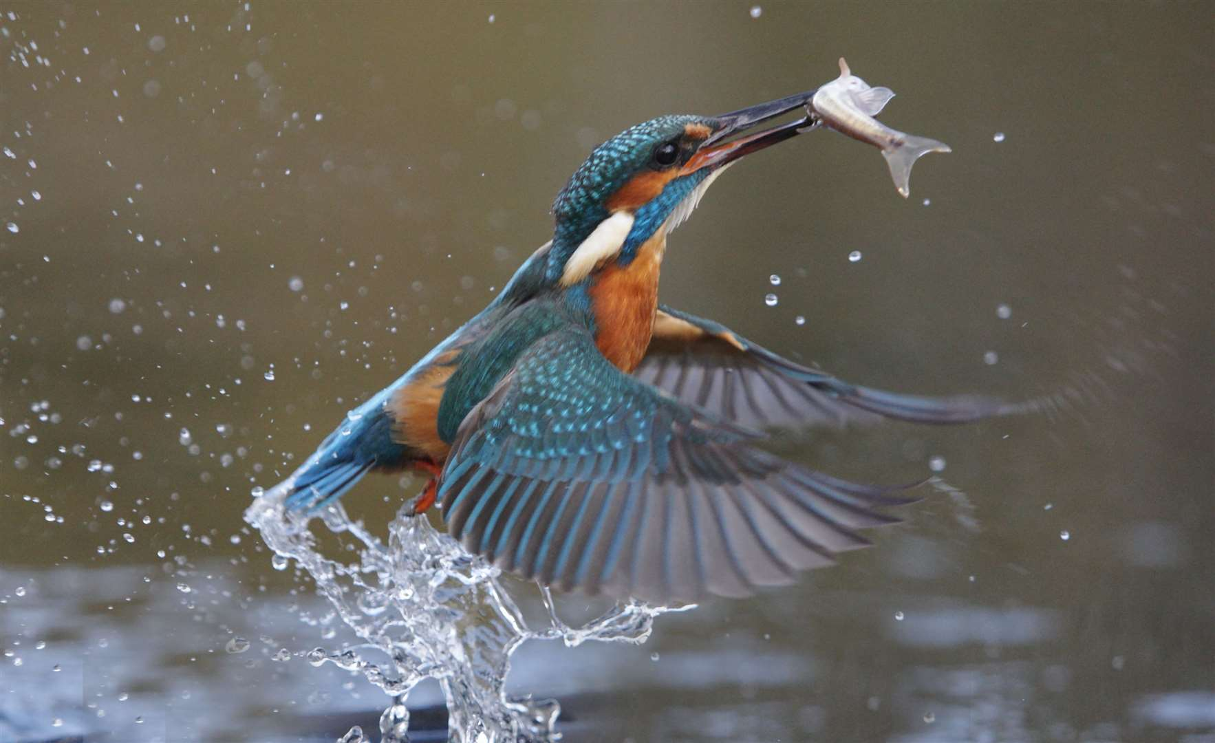 A kingfisher (21783956)