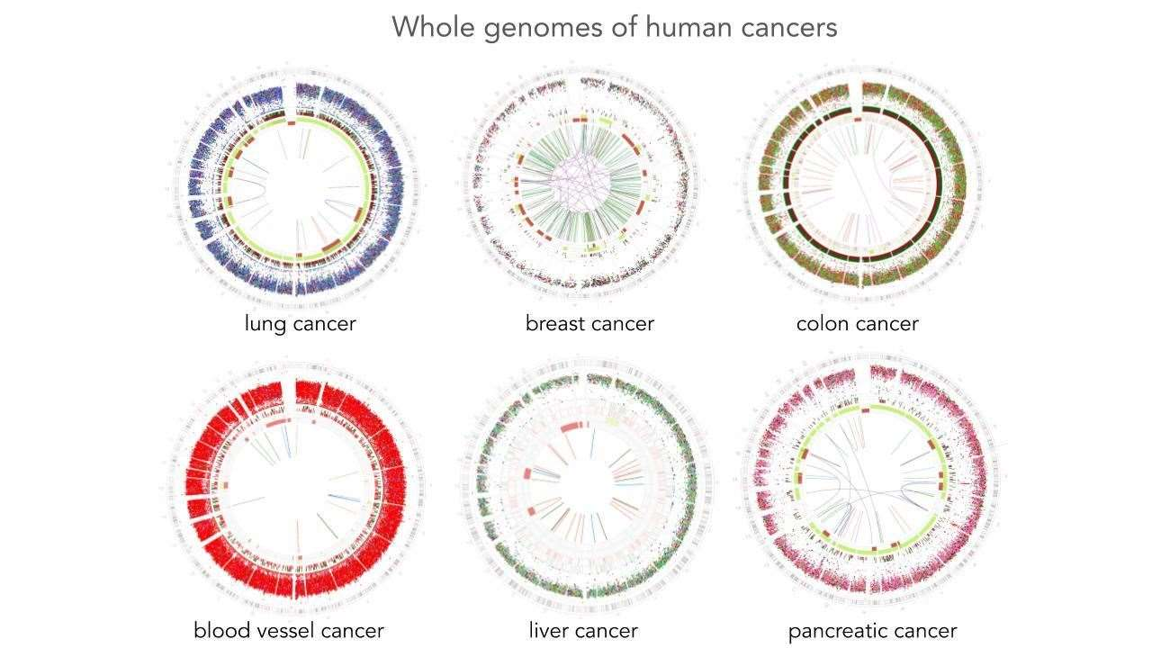 Mutations present in whole genome cancers as seen in patients. three have environmental exposures: smoking, UV-damage and aristolochic acidtwo have internal sources of DNA damage: BRCA1 and Lynch Syndrome (MLH1)one has pink pattern but the source is unknown. Picture: University of Cambridge (9279114)