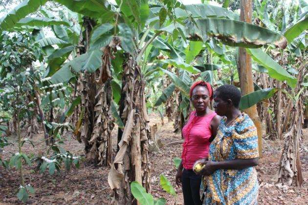 Storimarket is currently selling six products from African smallholders. Picture: Storimarket