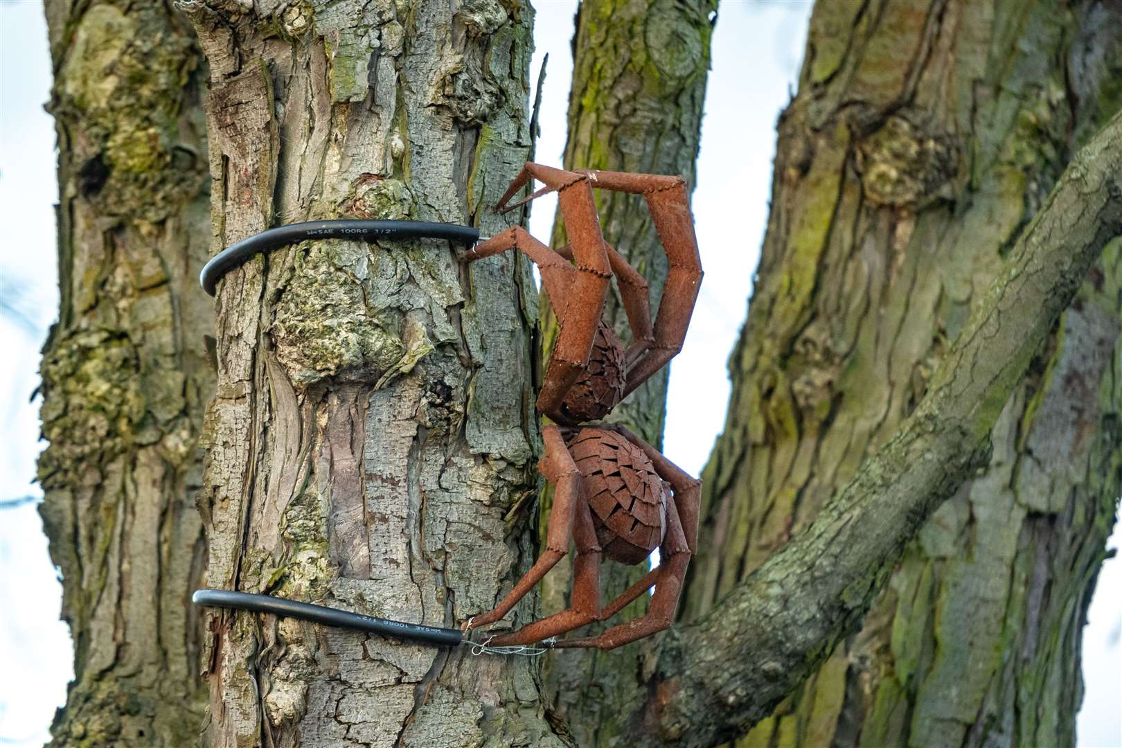 Spider - in a tree on the Village Green one of Tony Hillier's sculptures. Picture: Keith Heppell