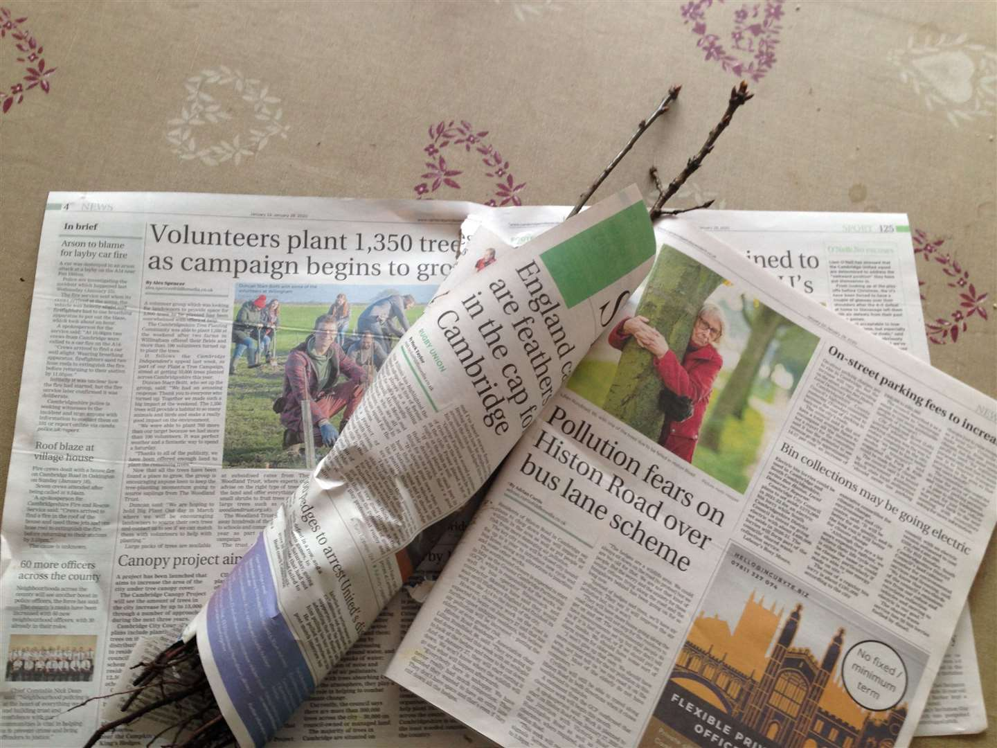 Wrapping oak saplings in a copy of the Cambridge Independent: the trees will be planted in Melwood in Meldreth, alongside the River Mel, in celebration of the film 'Waterlight' that James Murray-White made about the life of the river last year - visit https://waterlightproject.org.uk