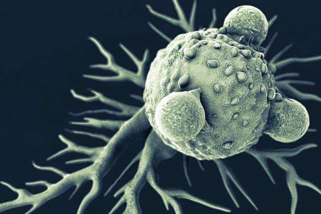 An illustration of T cells attached to a cancer cell