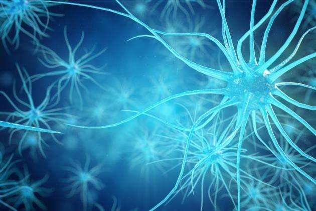 An illustration of neuron cells
