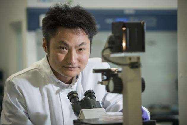 Dr Yichen Shi at Axol Bioscience, Chesterford Research Park. Picture: Keith Heppell