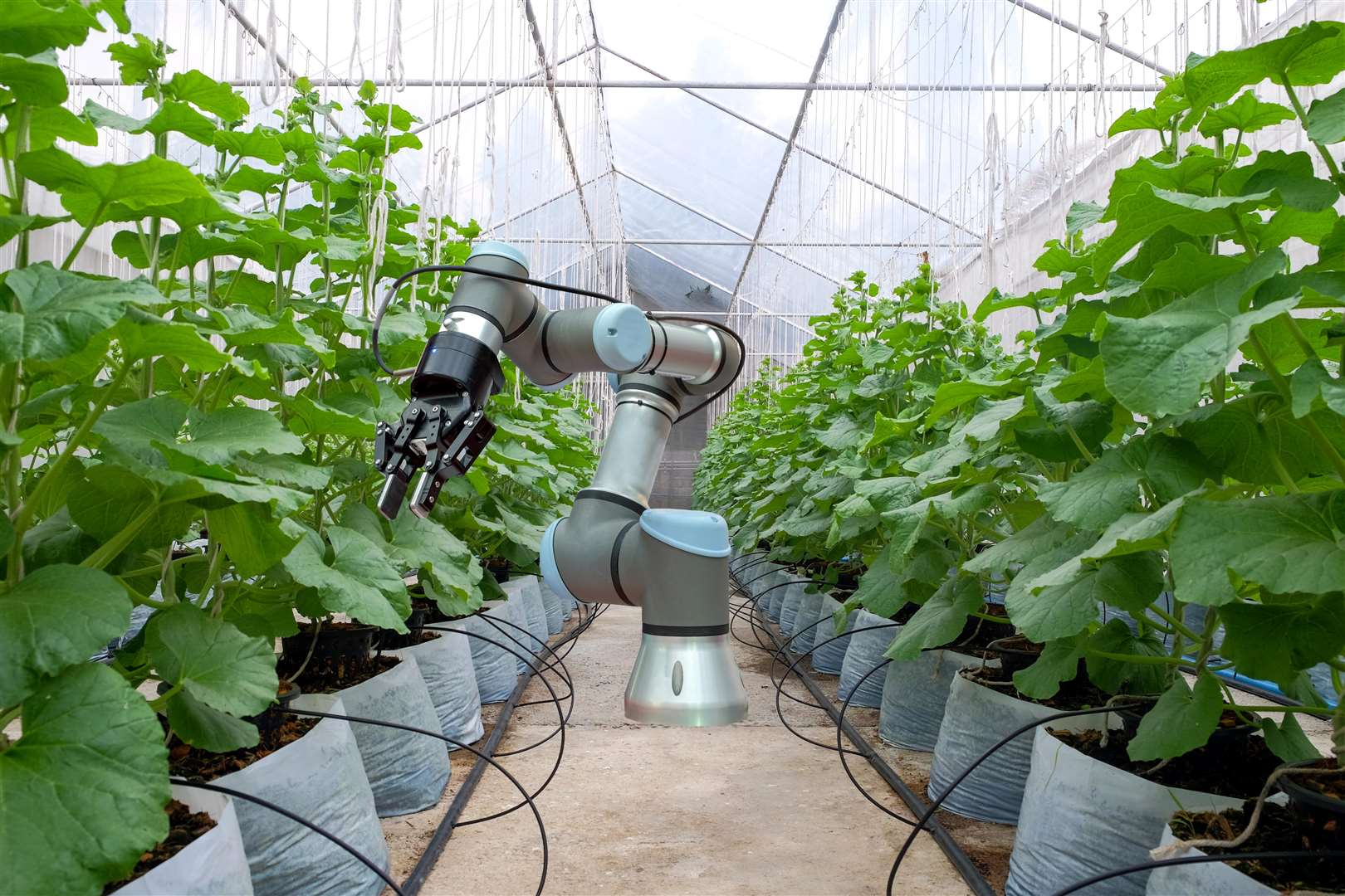 A robot at work in a greenhouse (7257409)
