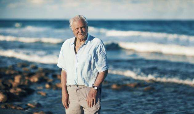 David Attenborough narrates Blue Planet II on BBC One. Picture: BBC