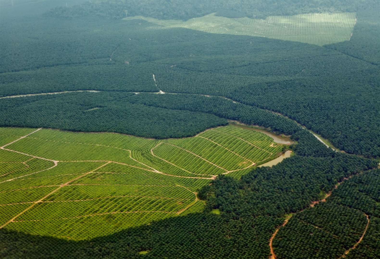 Oil palm plantations in Sabah. Recently planted oil palms can be seen in the bright green grassy areas and a tiny bit of natural rainforest still struggles for survival farther away.