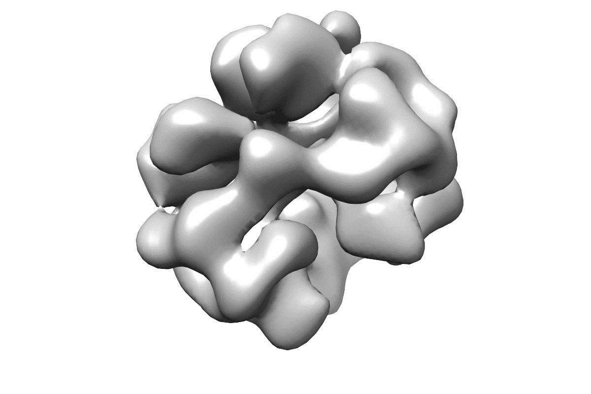 A 3D reconstruction of haemoglobin structure at 100 keV. Image: Chris Russo's group at the MRC Laboratory of Molecular Biology