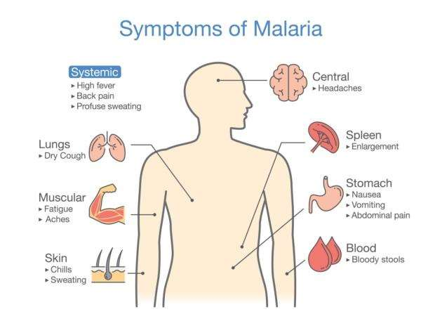 The symptoms of malaria